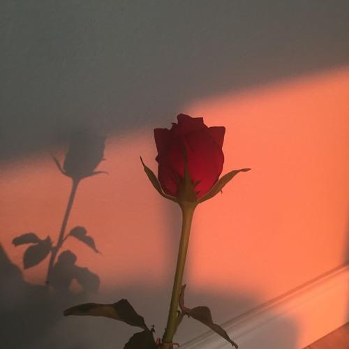 Roses 🌹