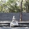 Download Cover : Buddha Nature - Sanyass Songs Mp3