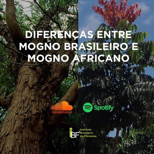 Podcast - Diferenças entre Mogno Brasileiro e Mogno Africano