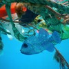 3 Effects Of Marine Pollution On SIDs