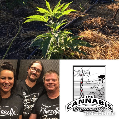 Tweedle Farms - 02/08/2019 by the cannabis connection | The Cannabis