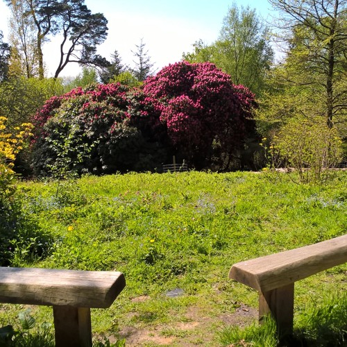 Under a Canopy - Leith Hill Place