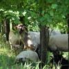 Séjour à Palmer - Il était une bergère #6