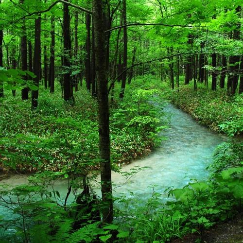 Forest Bathing; Book Barn; Plus, Author Karen Salmansohn