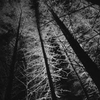 The Silence - Naša lod ,