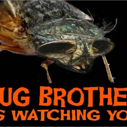 'BUG BROTHER IS WATCHING YOU' - July 25, 2019