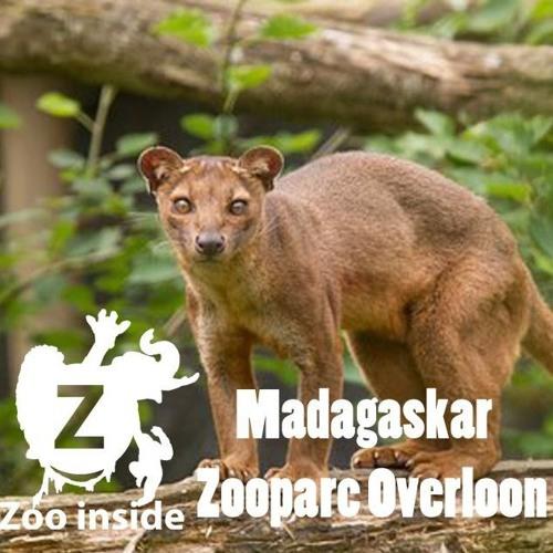 Zoo Inside - Aflevering 41
