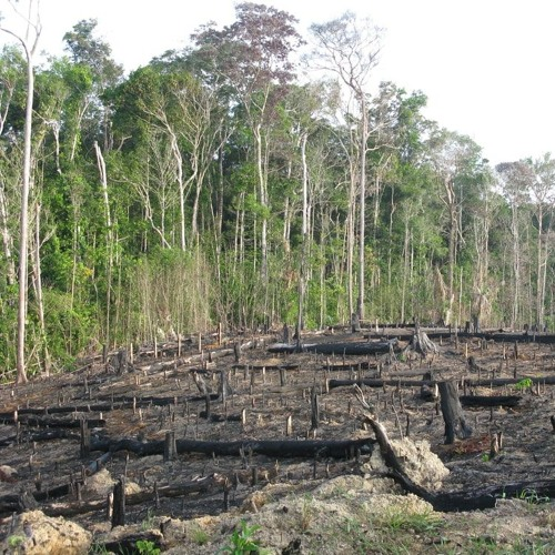 A Spike In Tree Loss Puts The Amazon Rainforest At Risk