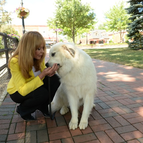 Integrative Approaches To Pet Health With Dr. Carol Osborne