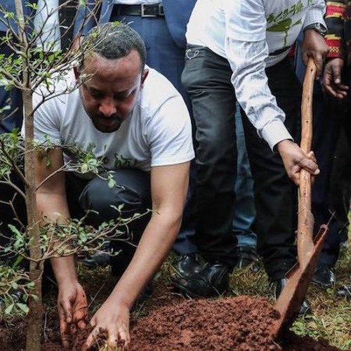 Bob Koigi: What the world can learn from Ethiopia's Green Legacy Initiative