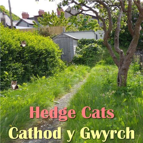 Hedge Cats / Cathod y Gwyrch