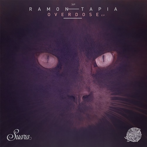 All about music and cats | Suara Music