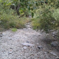 Salmonid Populations Suffering of Low Flows on Redwood Creek