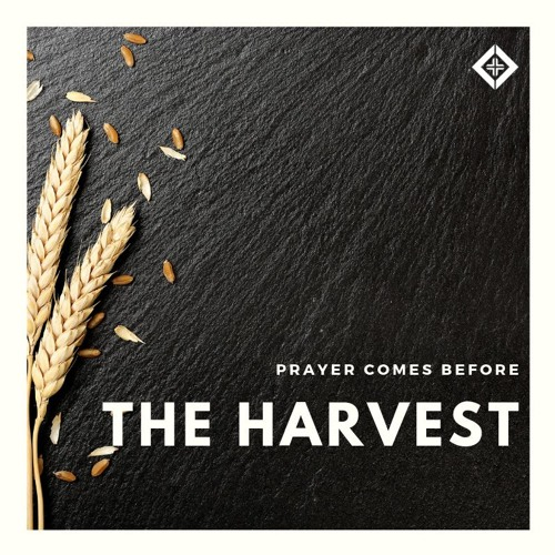 Prayer Comes Before the Harvest (Matthew 9:35-38)