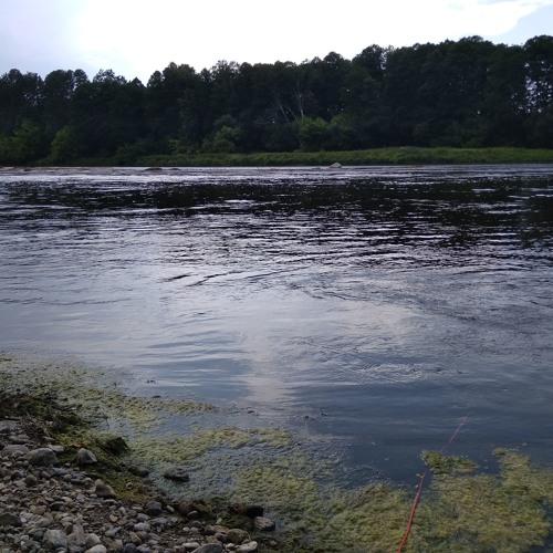 Nemunas River(hydrophone recording)