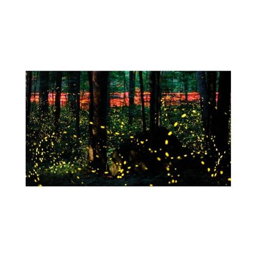 Fireflies (Ric de Large Remix)
