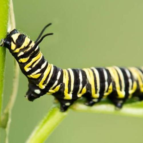 Yathu, VeeraV - Caterpillar