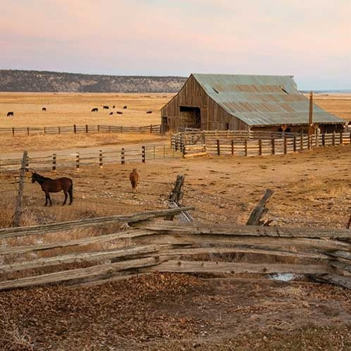 California Ranches: Lands in Transition