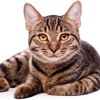 Download AM Radio Save The Cat Test Mp3