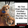 Download HPLS #39: My Two Dogs Getting Certified… And What That Has To Do With You Mp3