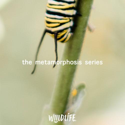 The Metamorphosis Series - Part II (June 23, 2019)