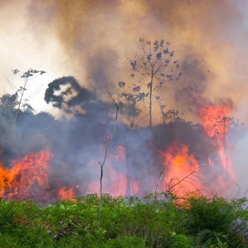 Das Amazonas-Gebiet in Gefahr (1/3)