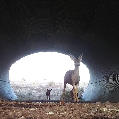 Wildlife Safety Crossings