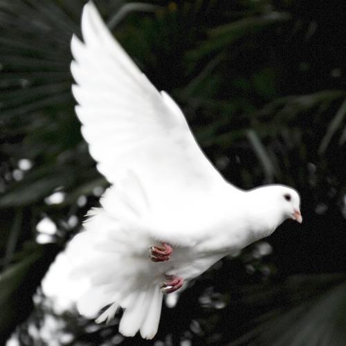Episode 76 - Holy Spirit 101