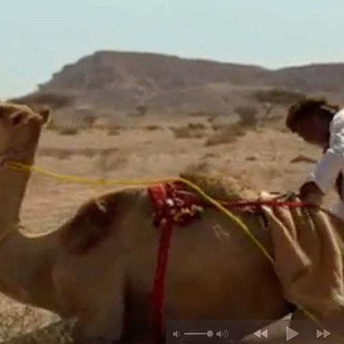 Dans Van De Schele Kamele