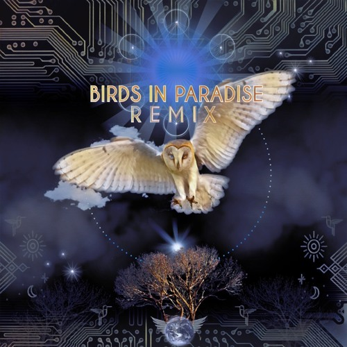 Bird Tribe - Amazonia (Shamans Dream & Geometrae Remix)