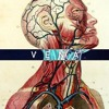 Download Karnage & MarkIV - Vena ft. Tina Marie [Deafblind Remix] [Free DL - Link In Description] Mp3