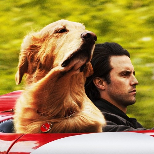 'The Art of Racing in the Rain' is a dog movie with a bit more bite