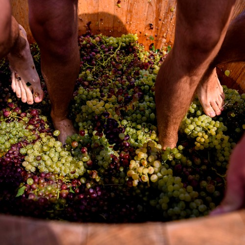 What's the deal with grape stomping?