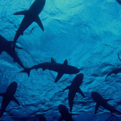 Music of Ocean Wonders SHARKS at New York Aquarium