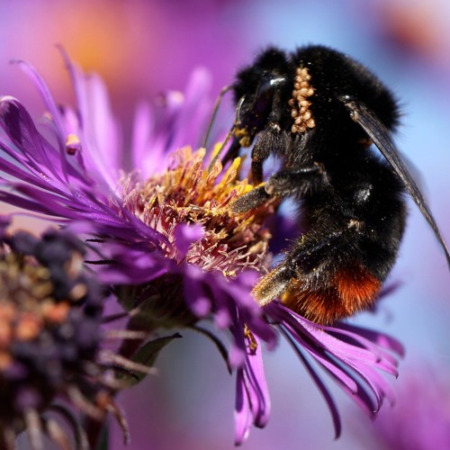 Brigit Strawbridge Howard: Dancing with Bees