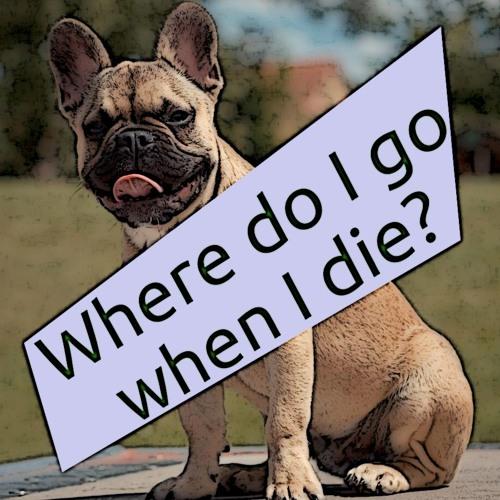 Little Saigon Report #164: Where does the french bulldog go when it dies?