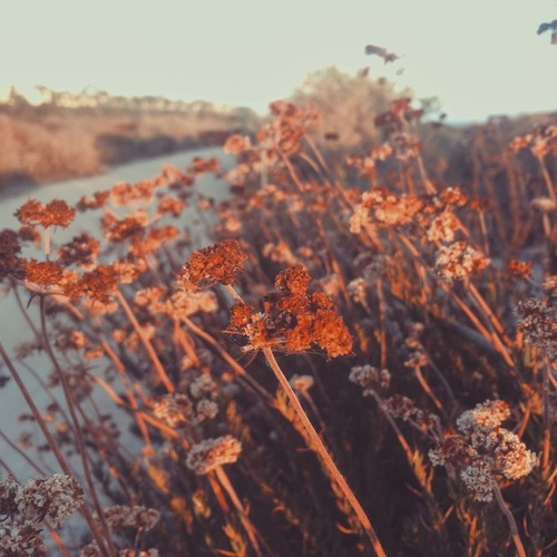sunset breeze - wip