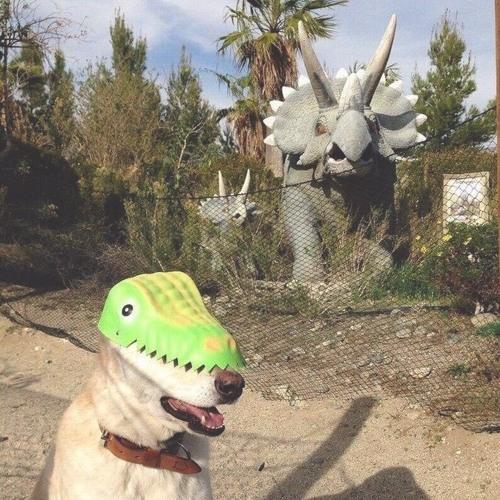 Динозавры вернуться, но добрые — Таджикская свадьба (хасл для моей бабули)