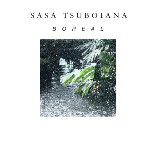 Boreal - Sasa Tsuboiana