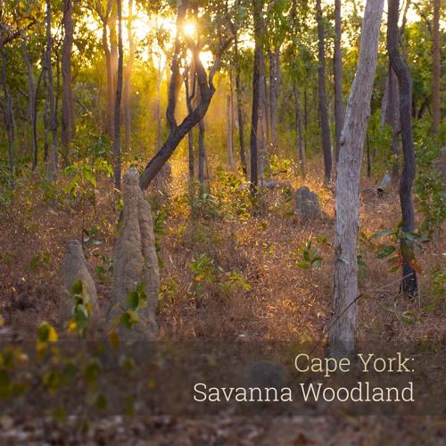 New Album - 'Cape York: Savanna Woodland'