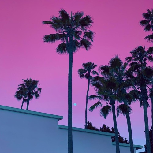 Palm Trees (feat. Jay Wile)