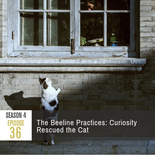 Season 4 Episode 36 - The Beeline Practices: Curiosity Rescued the Cat