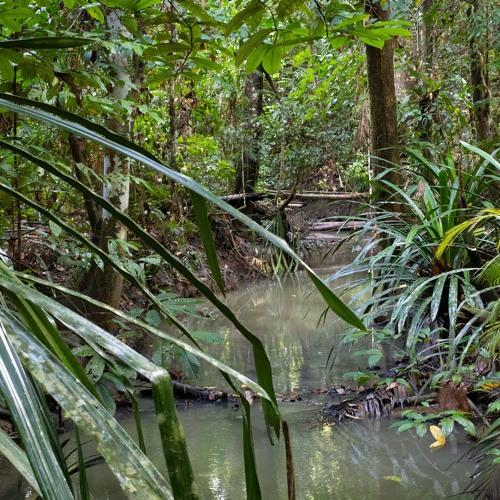 New Guinea - Biodiversity Hotspot