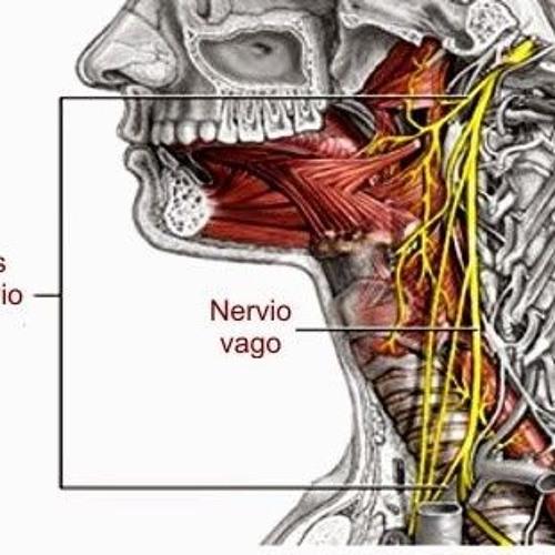 El Nervio Vago 1