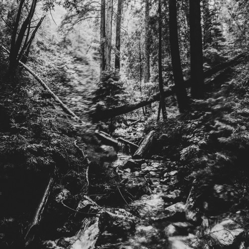 Lost In The Woods (with Corey Harper)