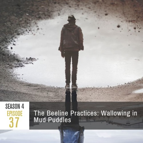 Season 4 Episode 37 - The Beeline Practices: Wallowing in Mud Puddles