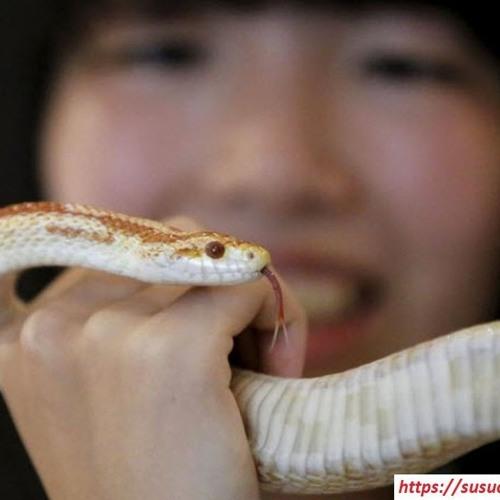 Nằm mơ thấy rắn báo điềm gì? Liên quan đên cặp số nào?