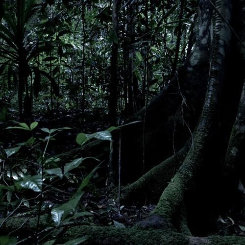 New Guinea - Dawn Chorus in Lowland Rainforest