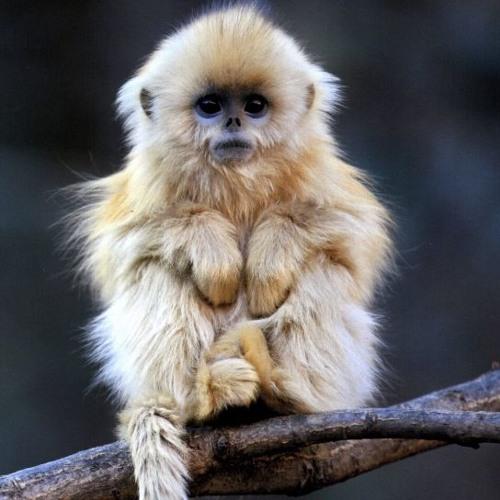 """Monkey Tree"""
