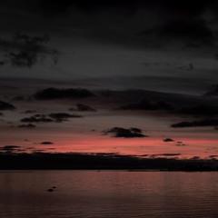 Swans (and flights) - 26/9/2019 - Makholma Bay